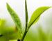 tea_leaf_123
